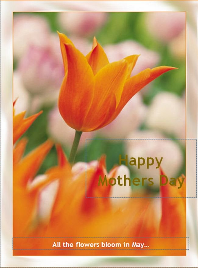 greeting-card-in-publisher-2010.jpg